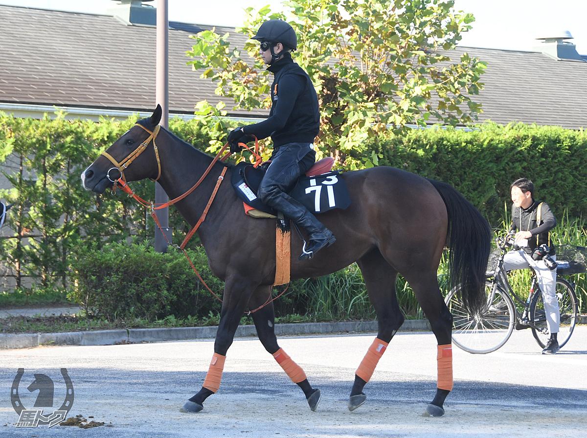 サダムラポールの馬体写真