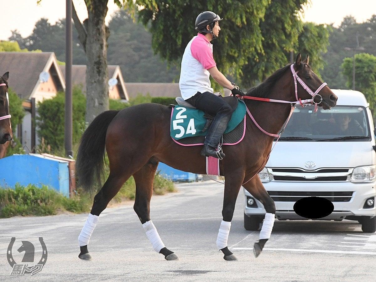 モノディアロゴスの馬体写真