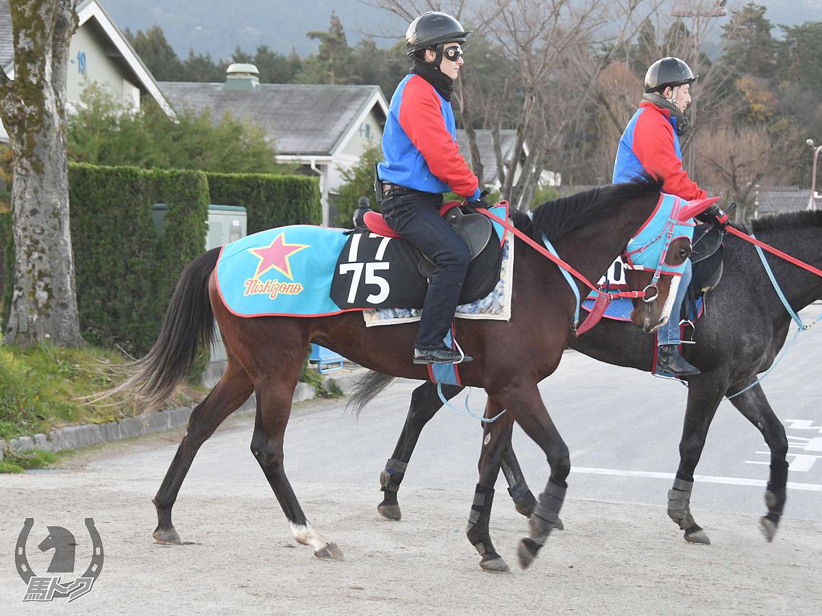 ラジュンジェレの馬体写真