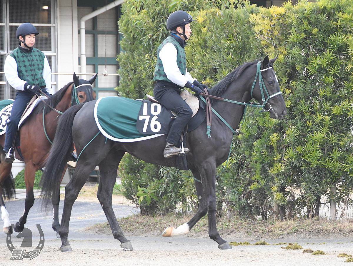 ヤマニンスプレモの馬体写真