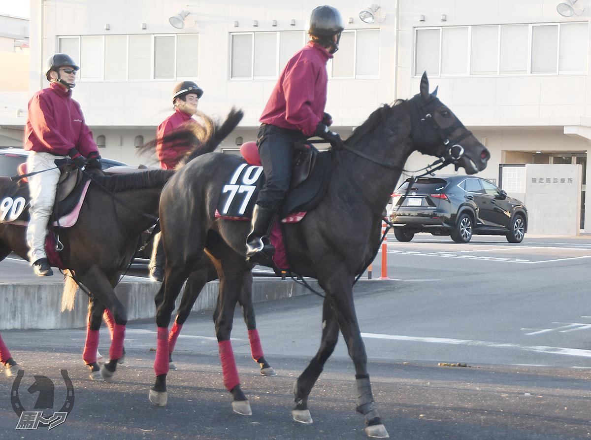 ヤマニンマヒアの馬体写真