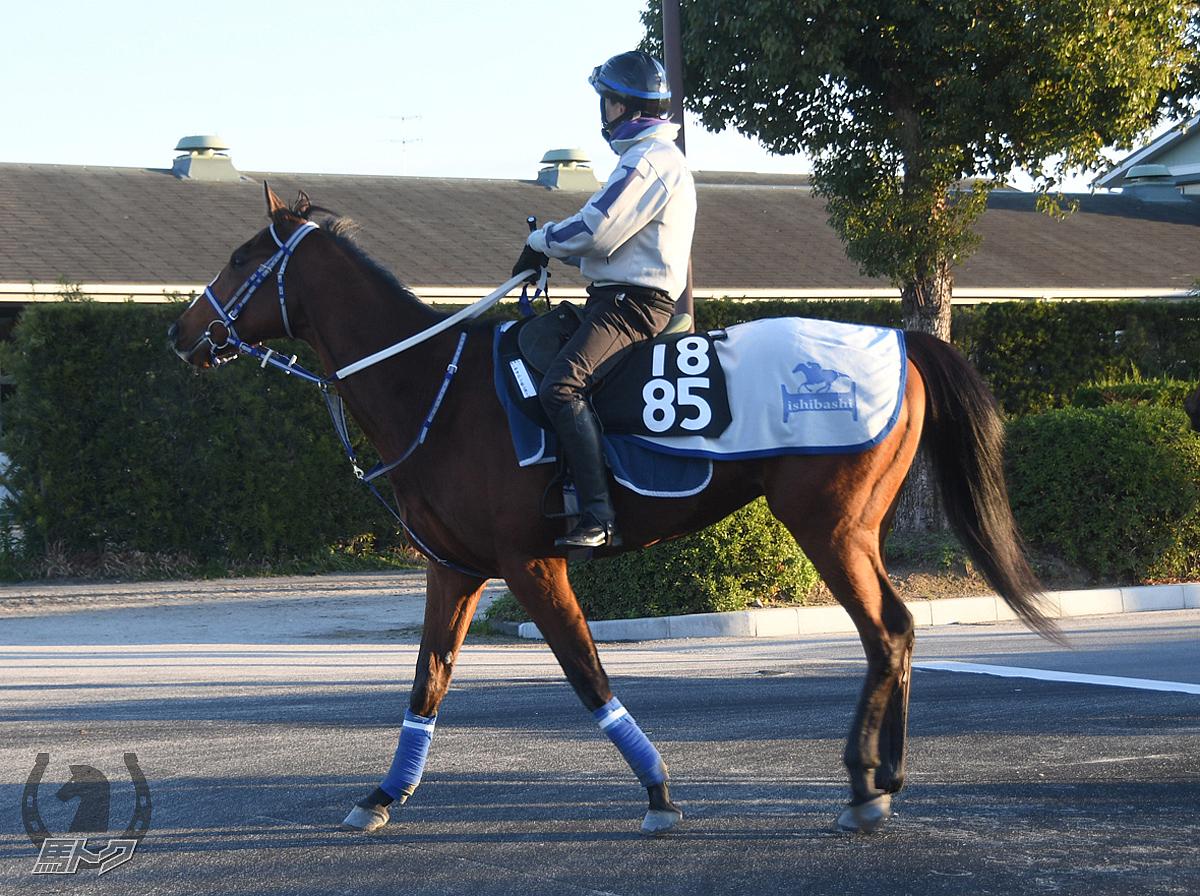 ヤマニンモンスーンの馬体写真