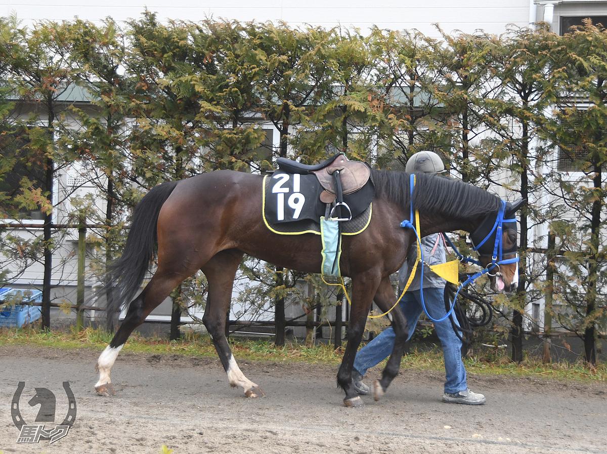 ヤマニンポルボロンの馬体写真