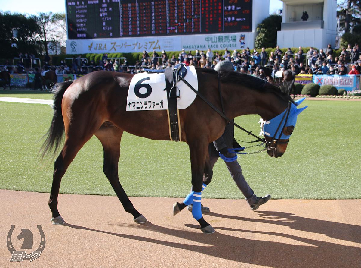 ヤマニンラファーガの馬体写真