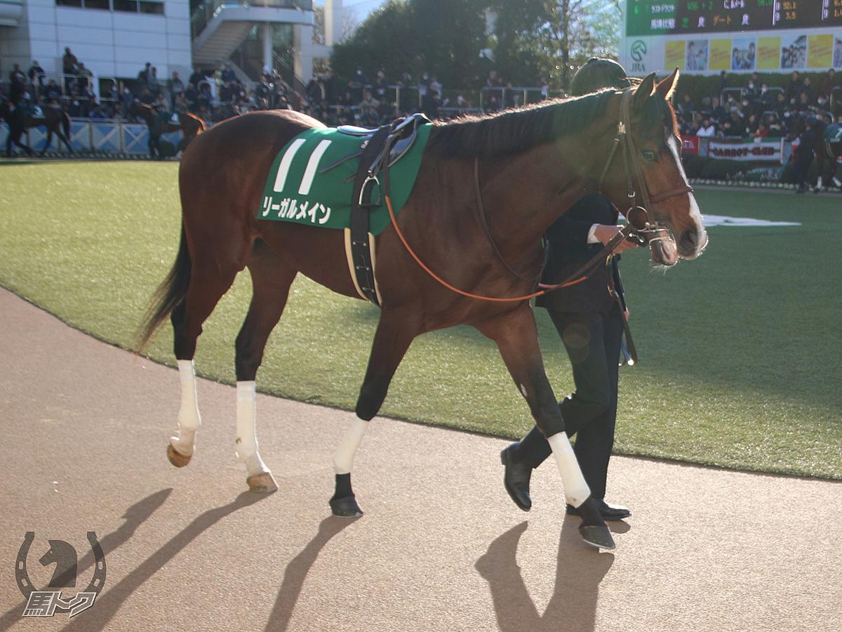 リーガルメインの馬体写真