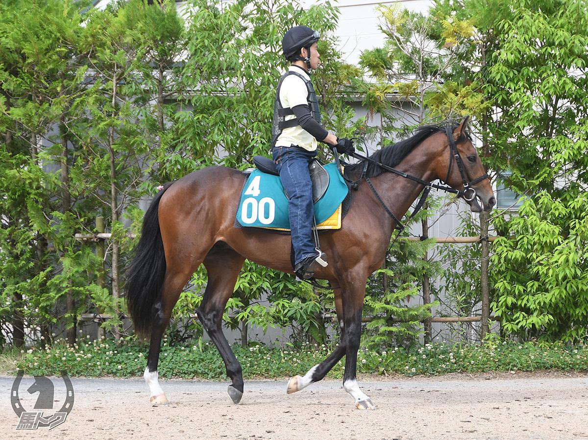 パープルヌーンの馬体写真