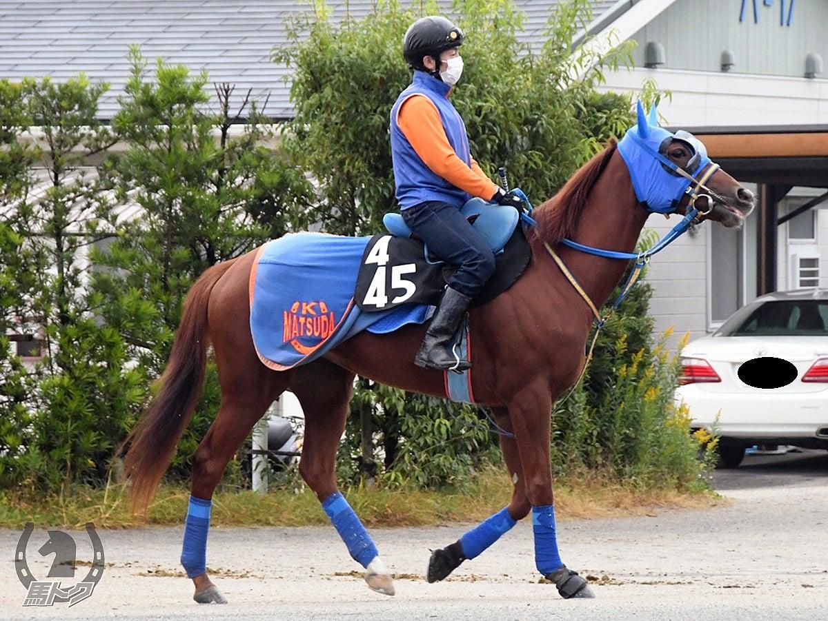 シャンタンエドゥーの馬体写真