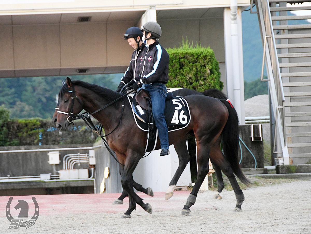 セロシアの馬体写真