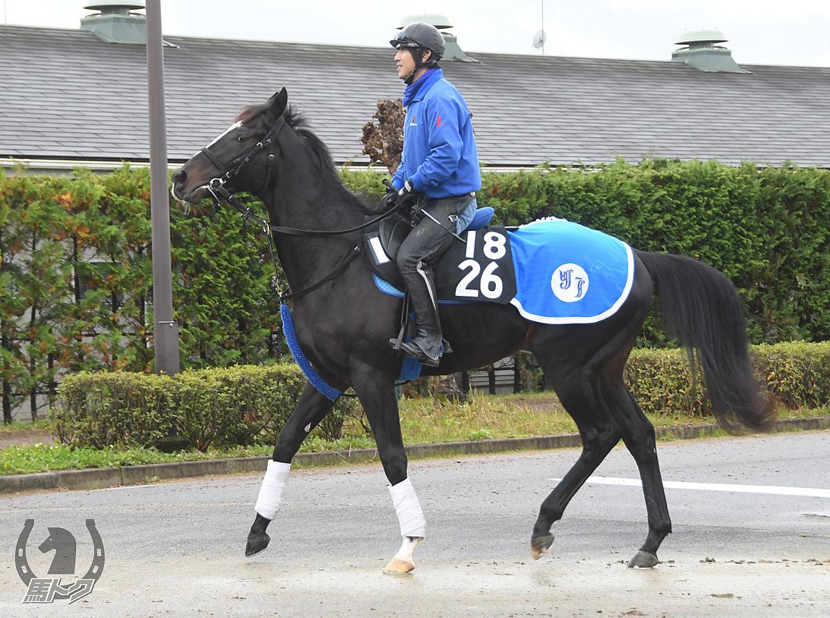 シュリの馬体写真