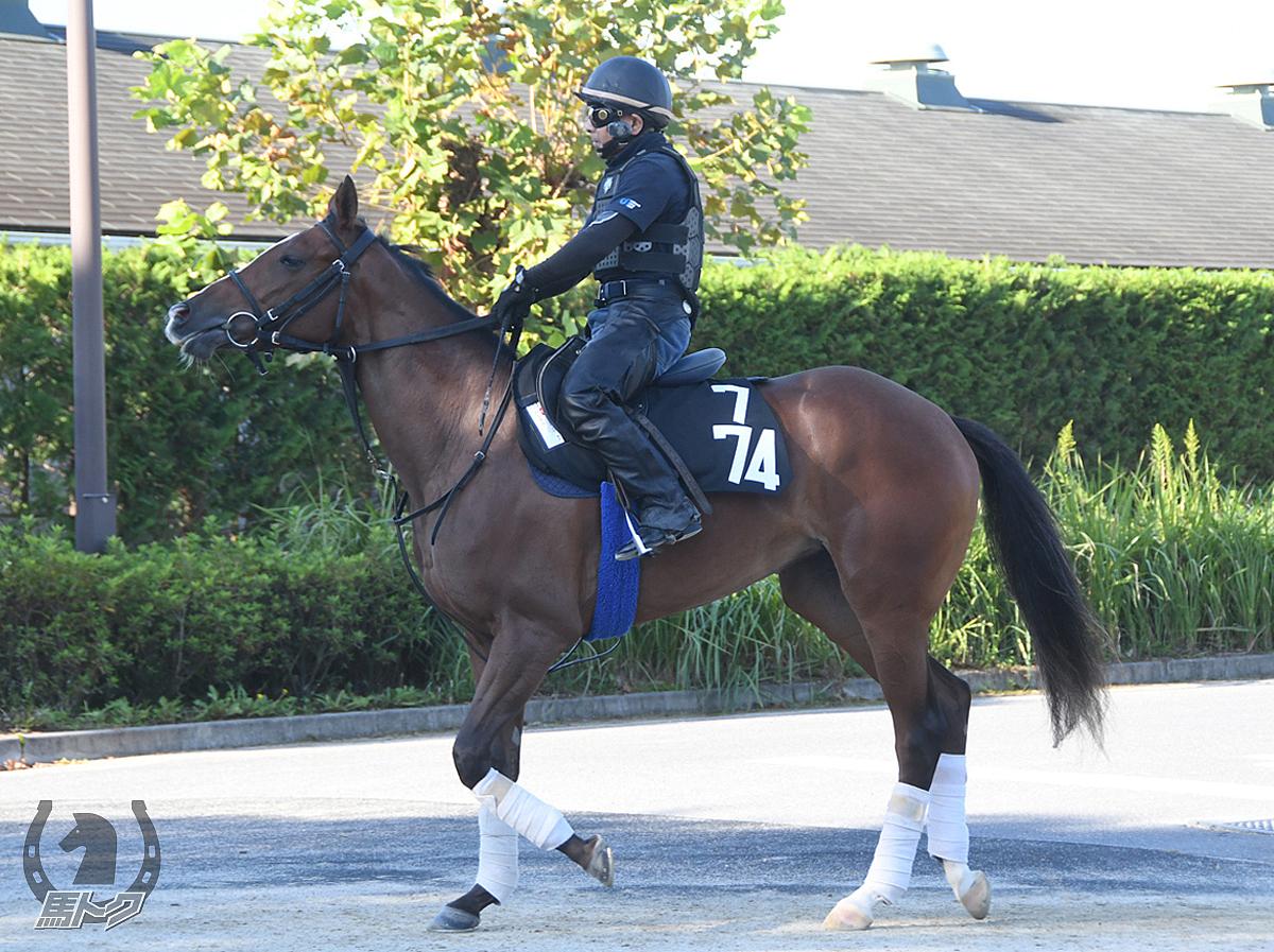 ハニエルの馬体写真