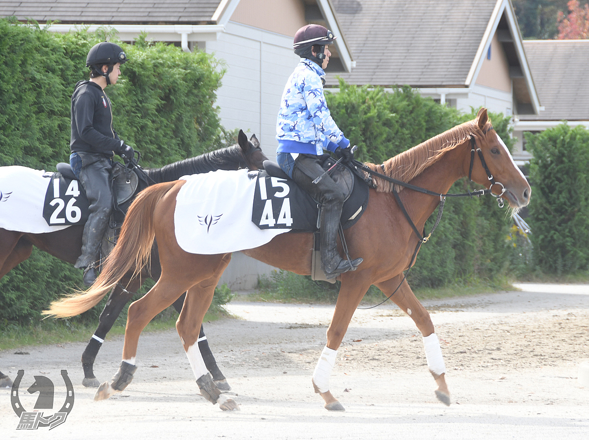 ララムリの馬体写真