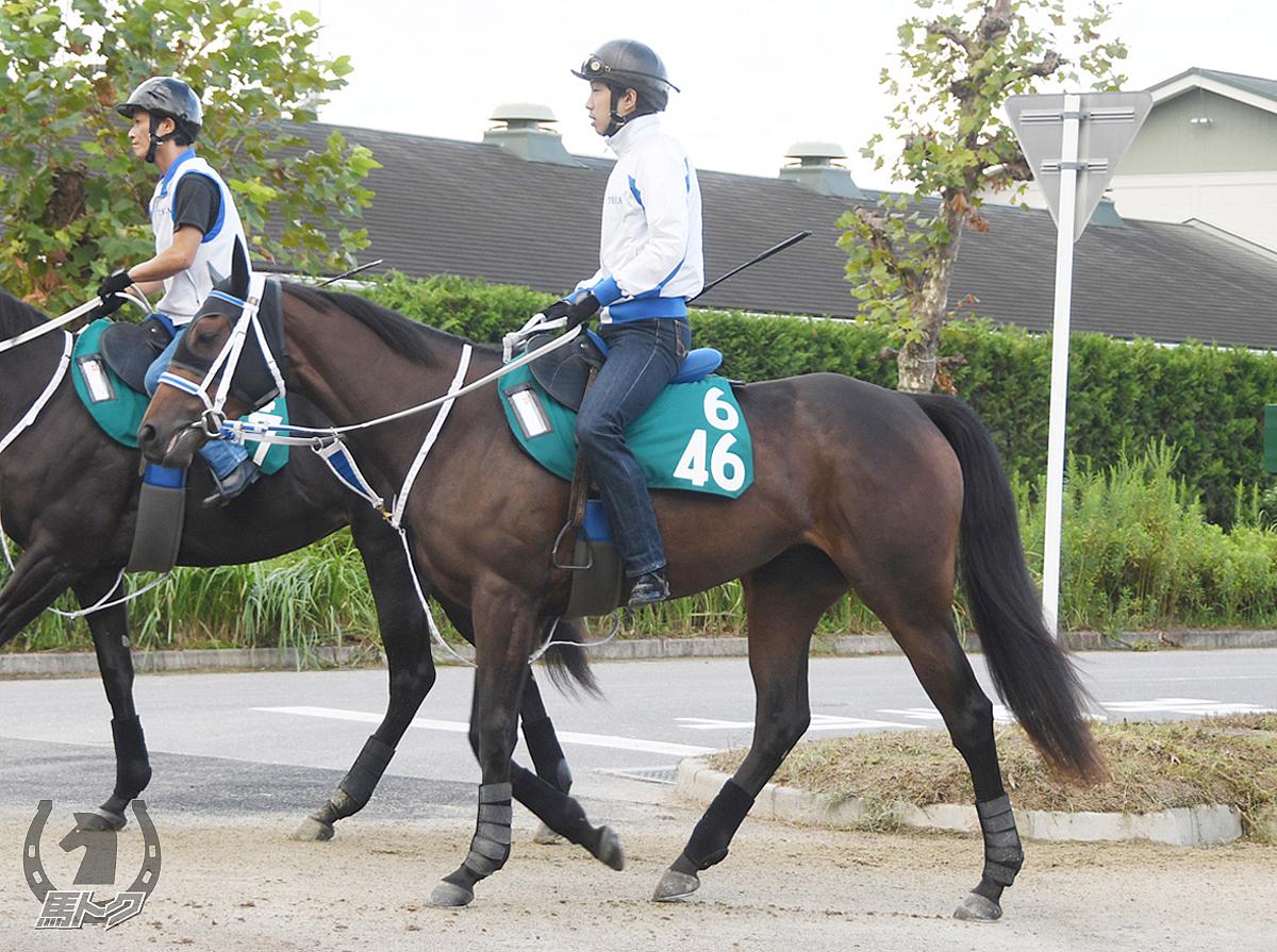 プリカジュールの馬体写真