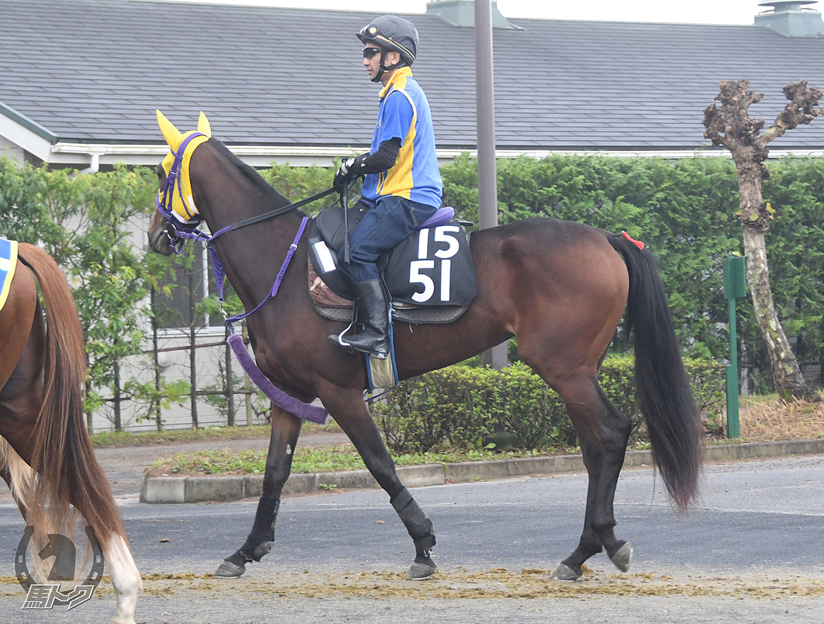 ハギノベルエキプの馬体写真