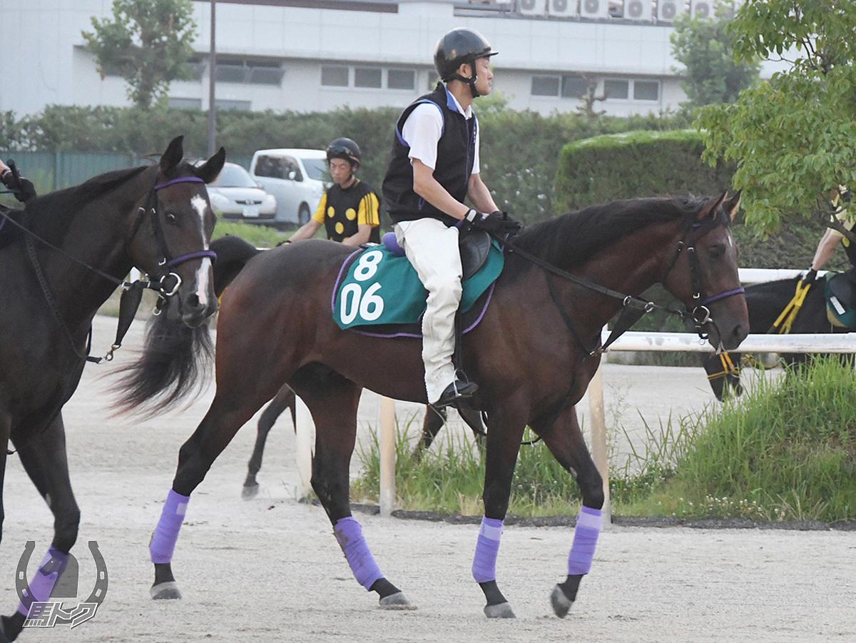カーブドシールの馬体写真