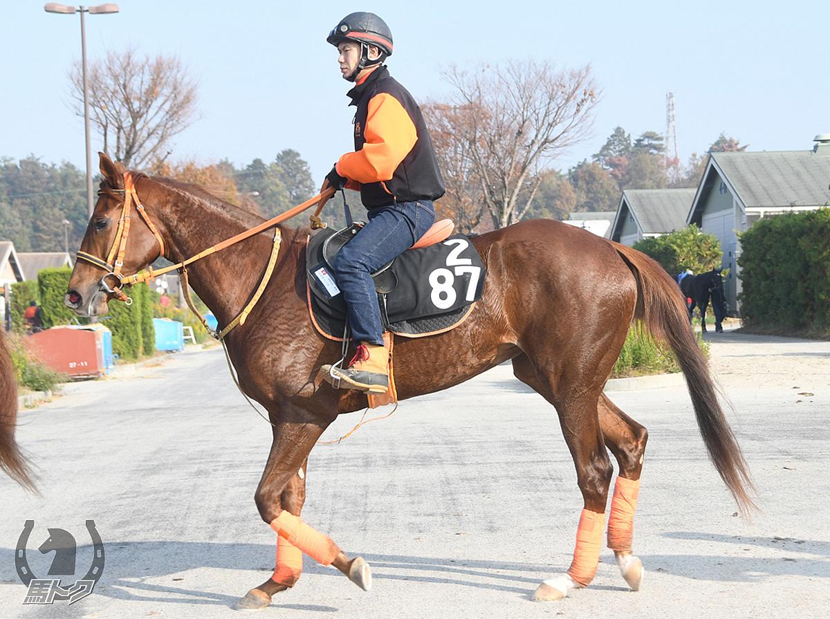 クラヴィーアの馬体写真