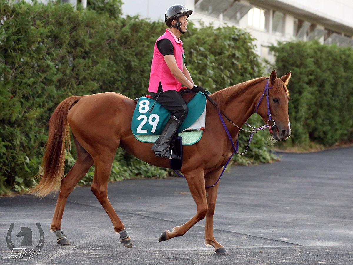 カリッサの馬体写真