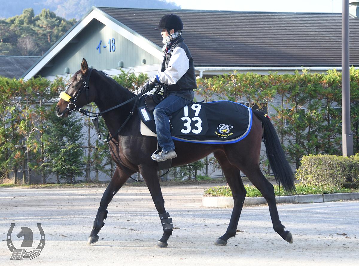 レイナローサの馬体写真