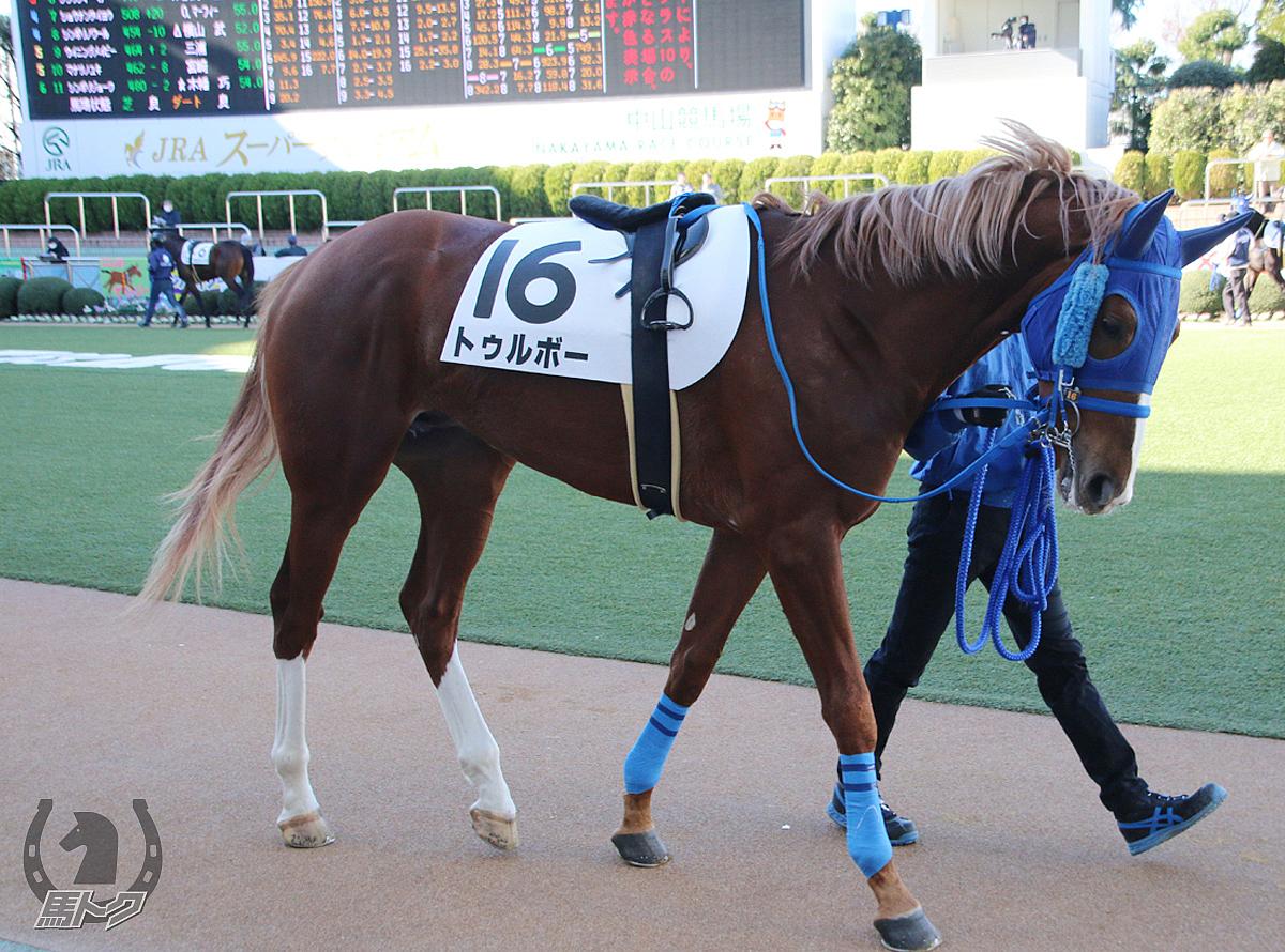トゥルボーの馬体写真