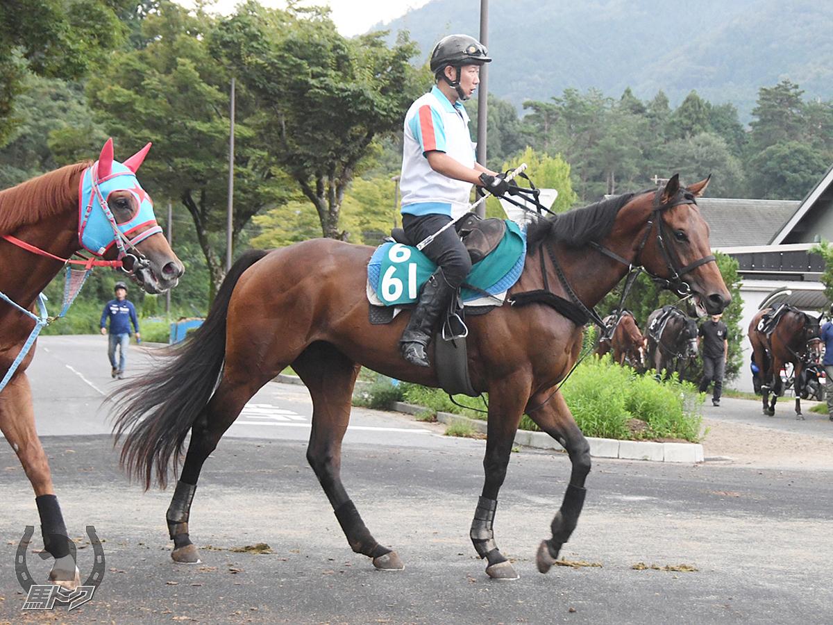 シーシャープの馬体写真