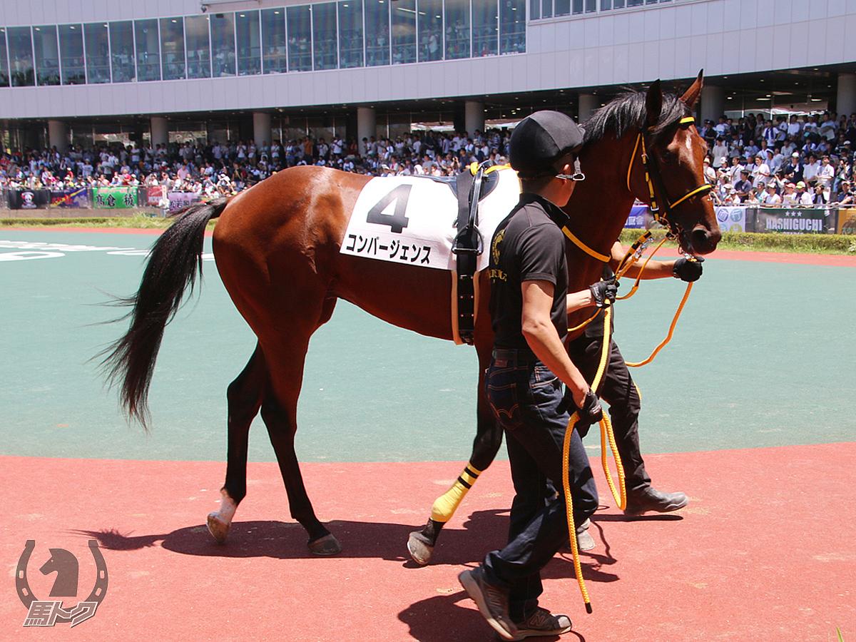 コンバージェンスの馬体写真