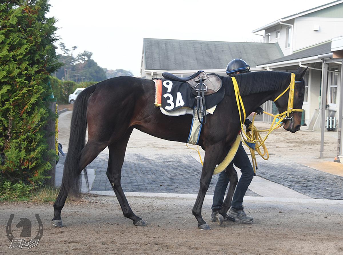 ヘレナの馬体写真