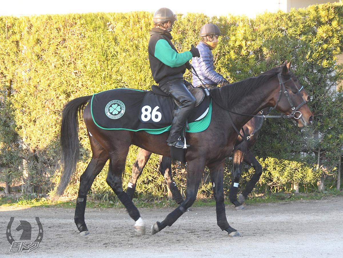 イグナーツの馬体写真