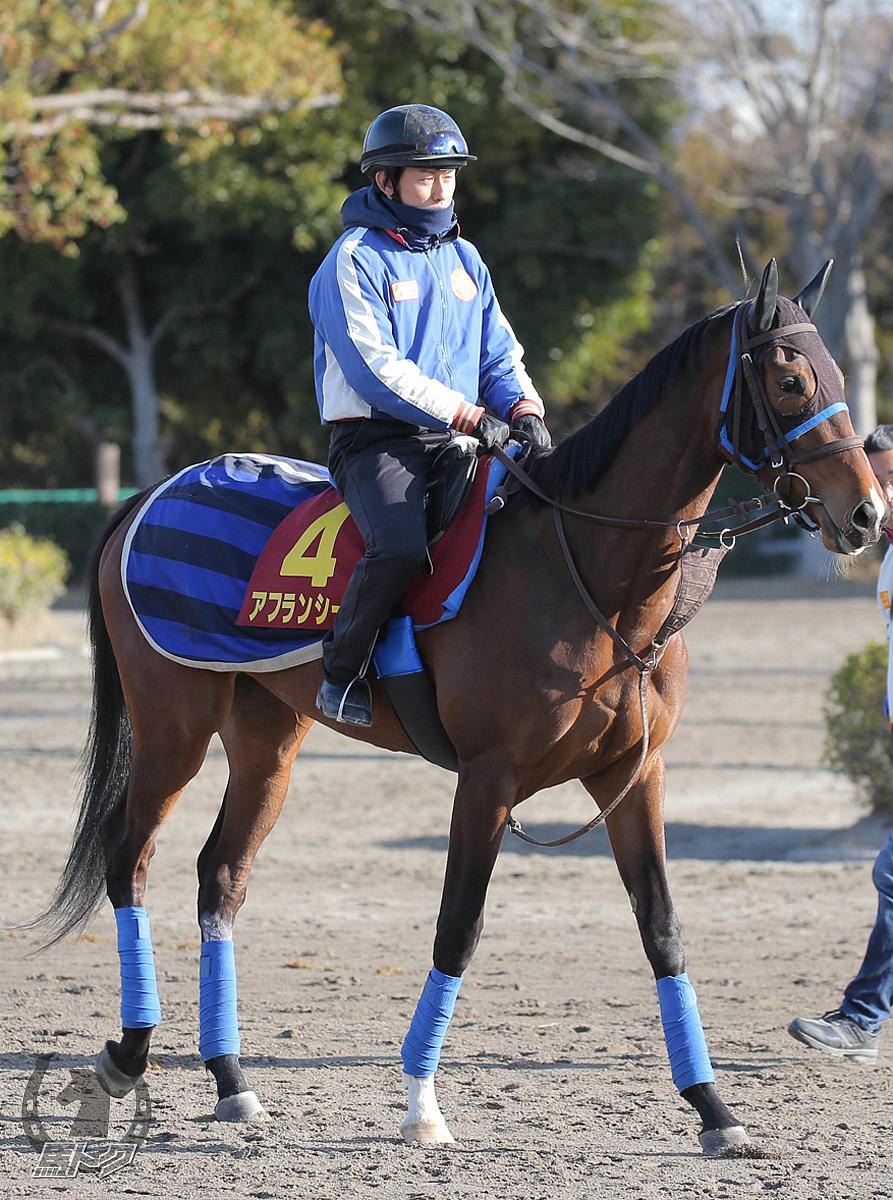 アフランシールの馬体写真