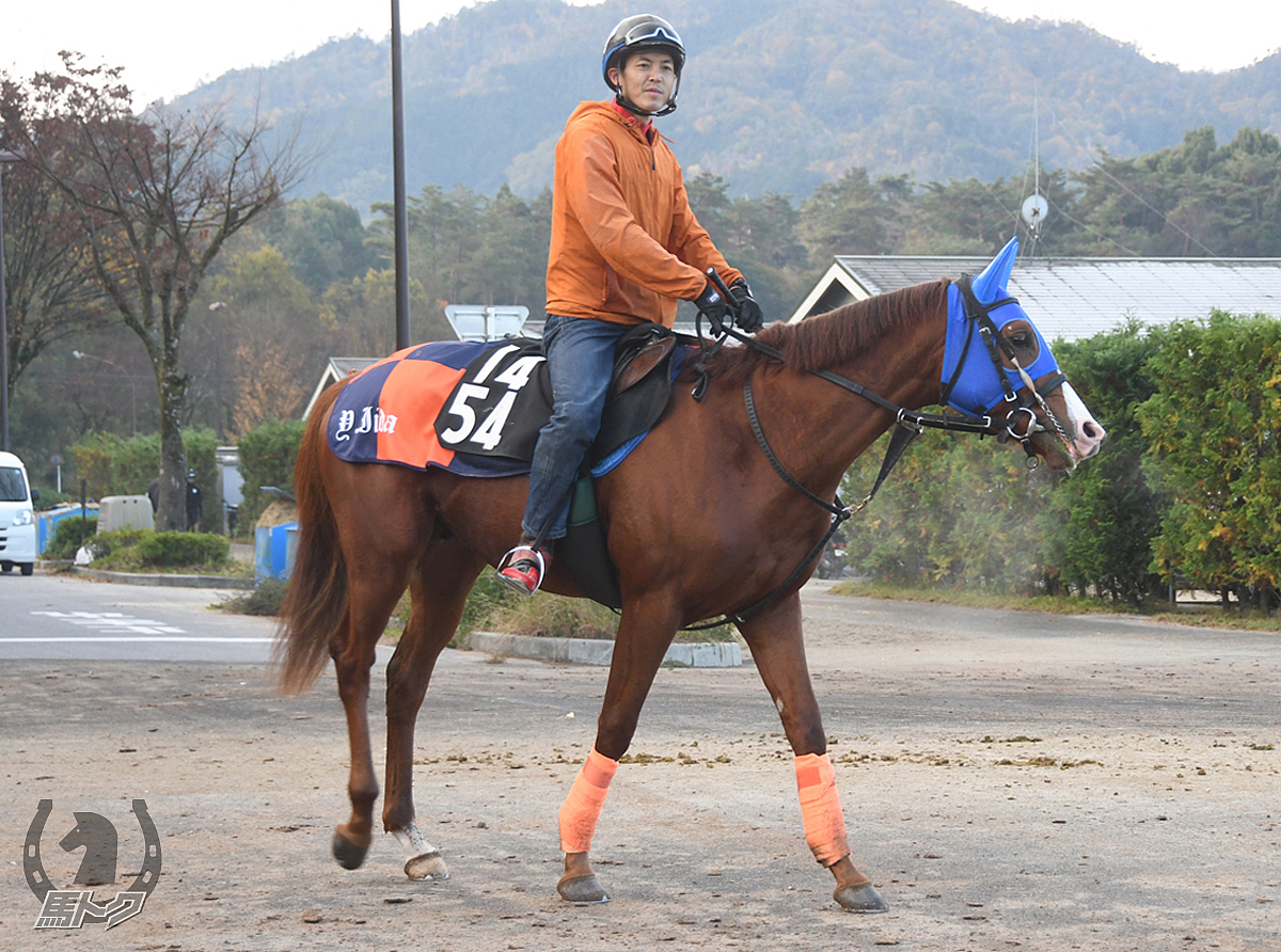 アイキャンテーラーの馬体写真