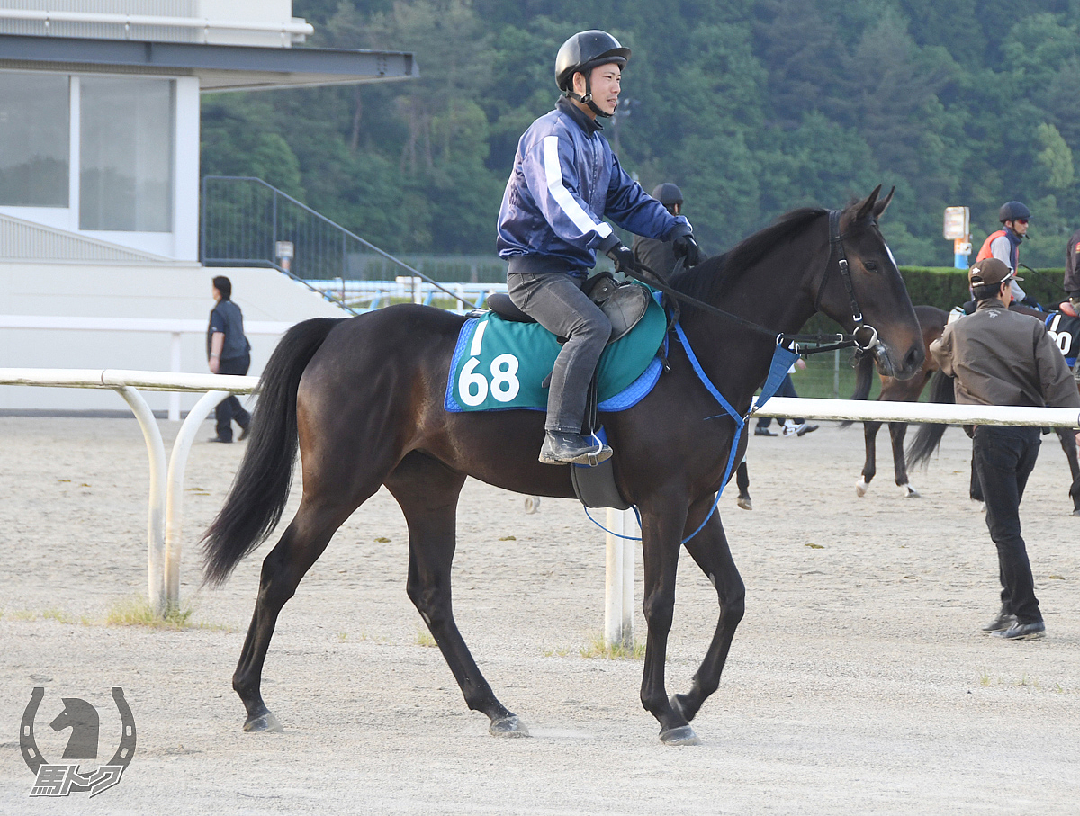 タイガーティナの馬体写真
