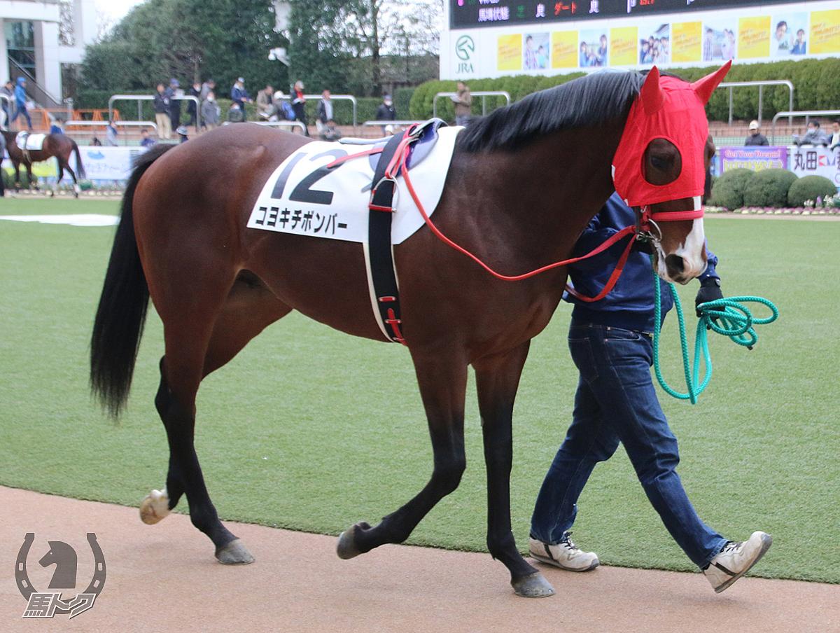 コヨキチボンバーの馬体写真