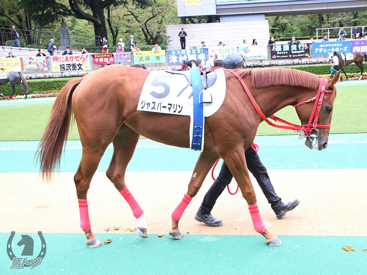 ジャスパーマリンの馬体写真