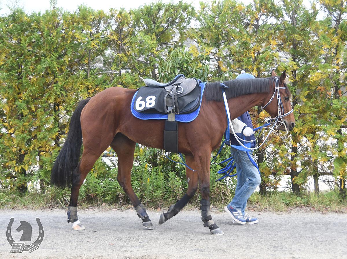 アルモニーセレストの馬体写真