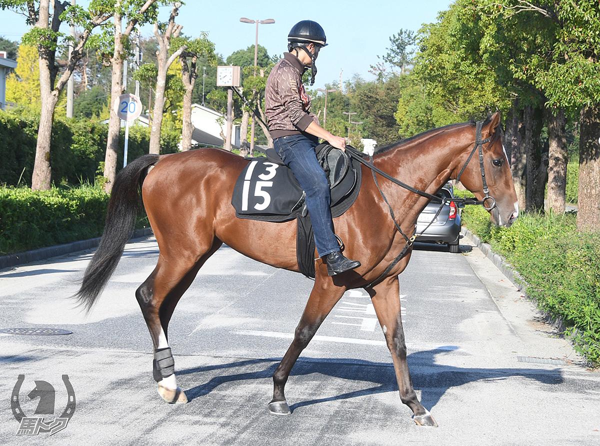 タウィーザの馬体写真