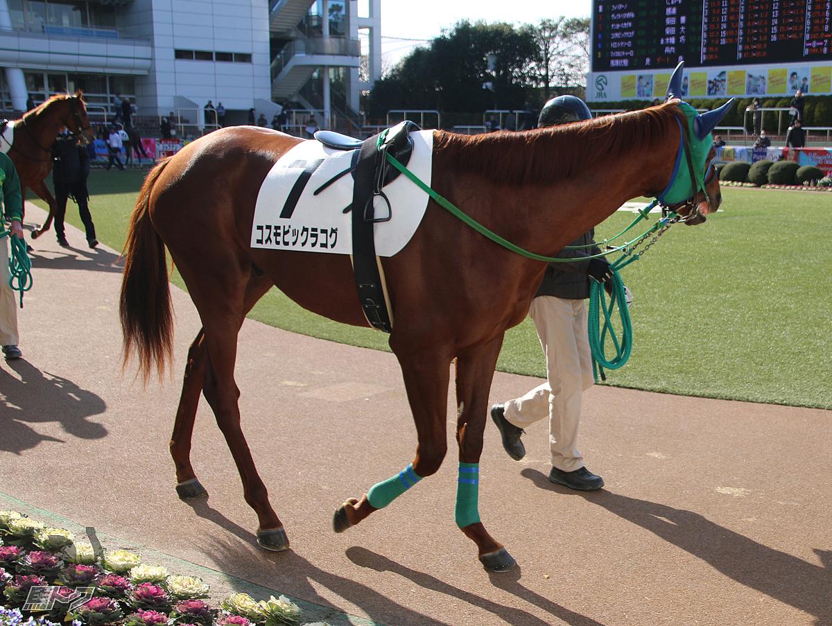 コスモビックラコグの馬体写真
