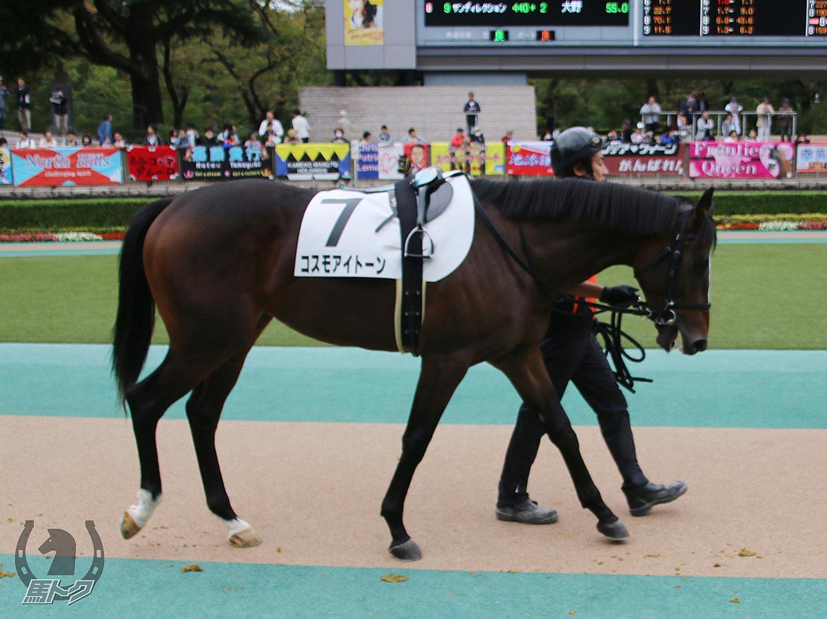 コスモアイトーンの馬体写真
