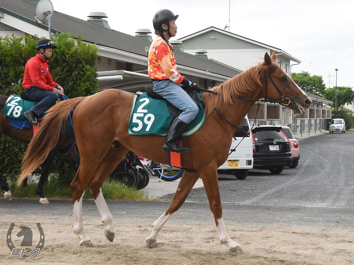 コスモルシオの馬体写真