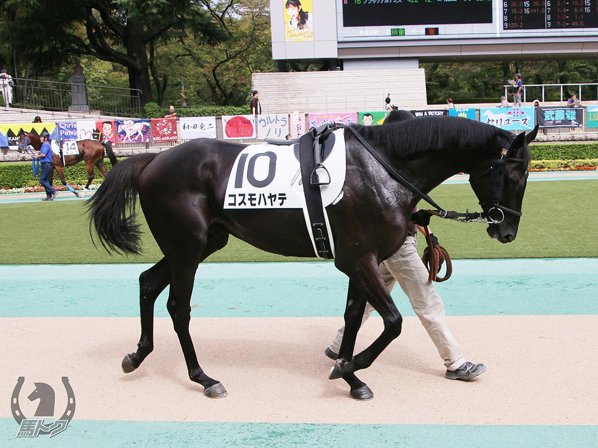 コスモハヤテの馬体写真