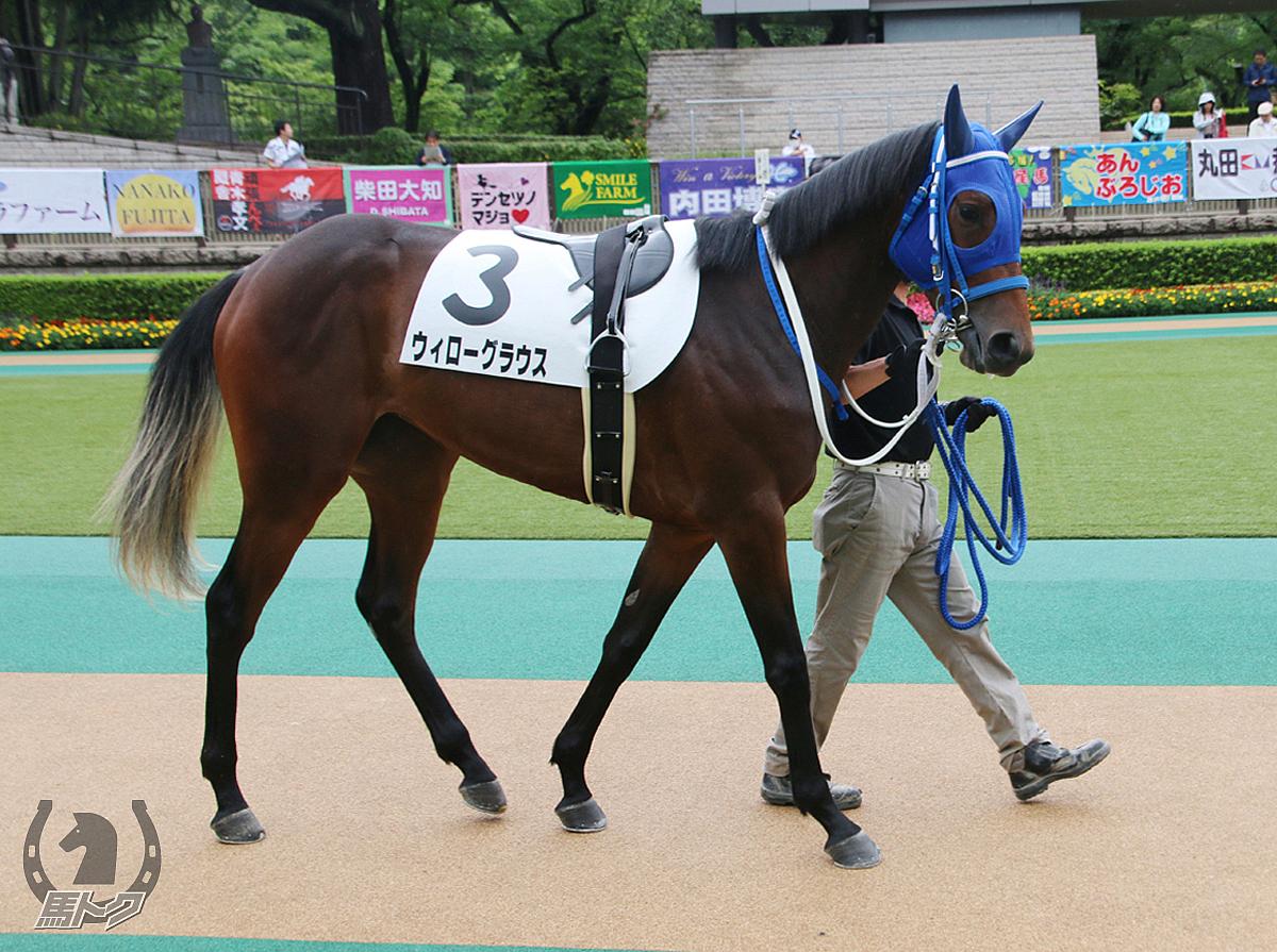 ウィローグラウスの馬体写真