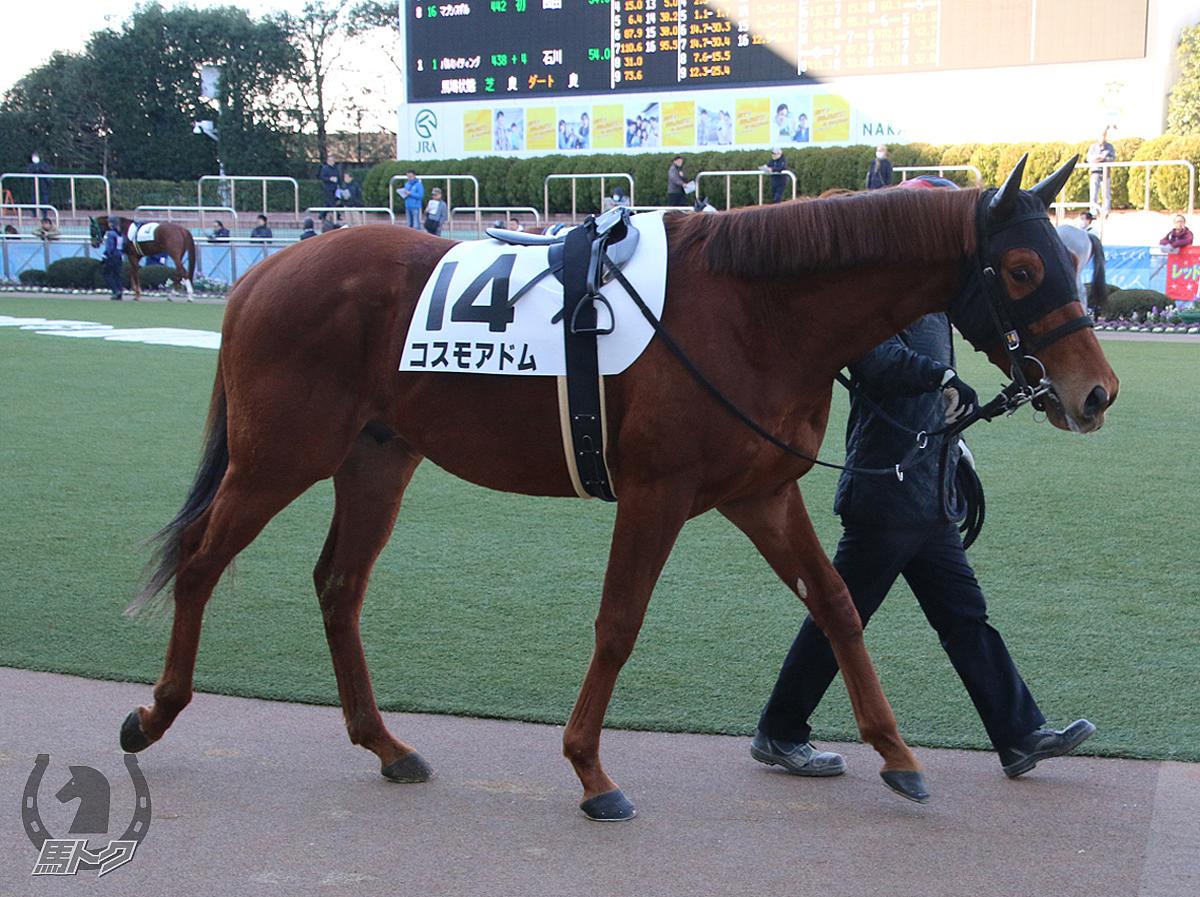 コスモアドムの馬体写真