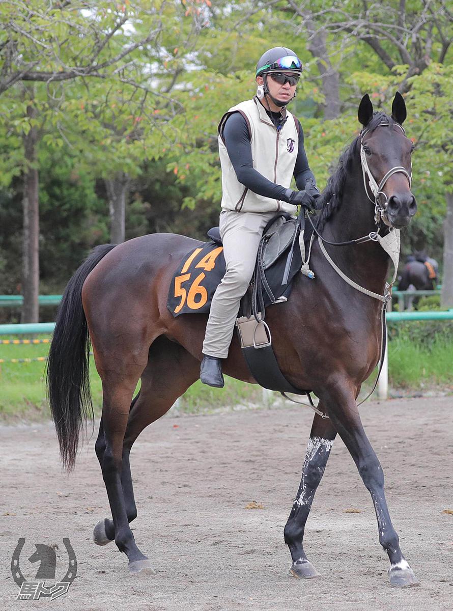 レオンドーロの馬体写真
