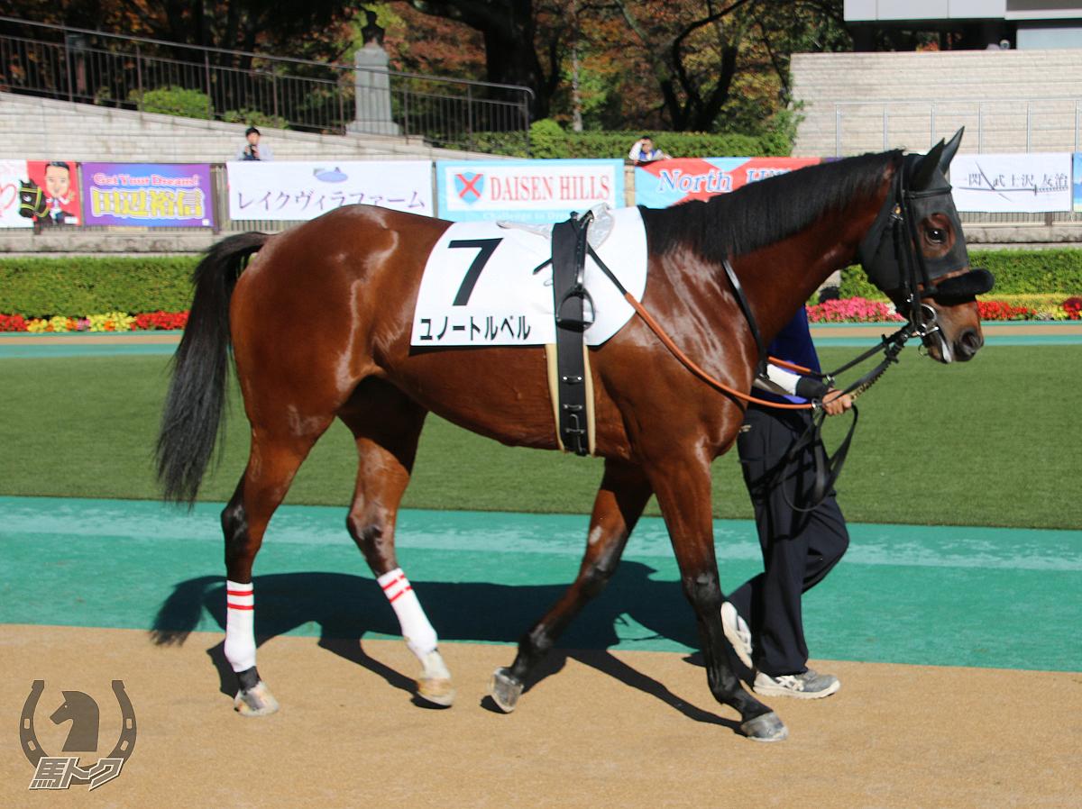 ユノートルベルの馬体写真