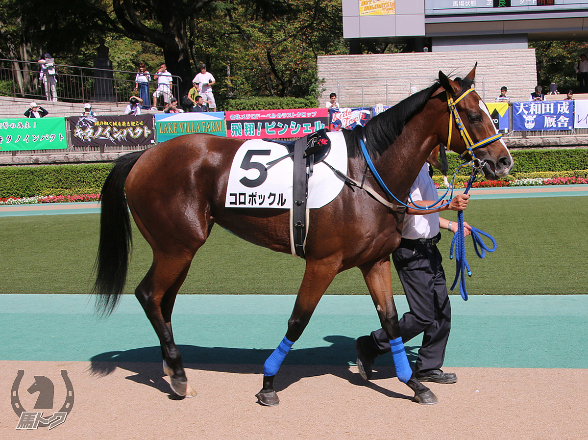 コロポックルの馬体写真