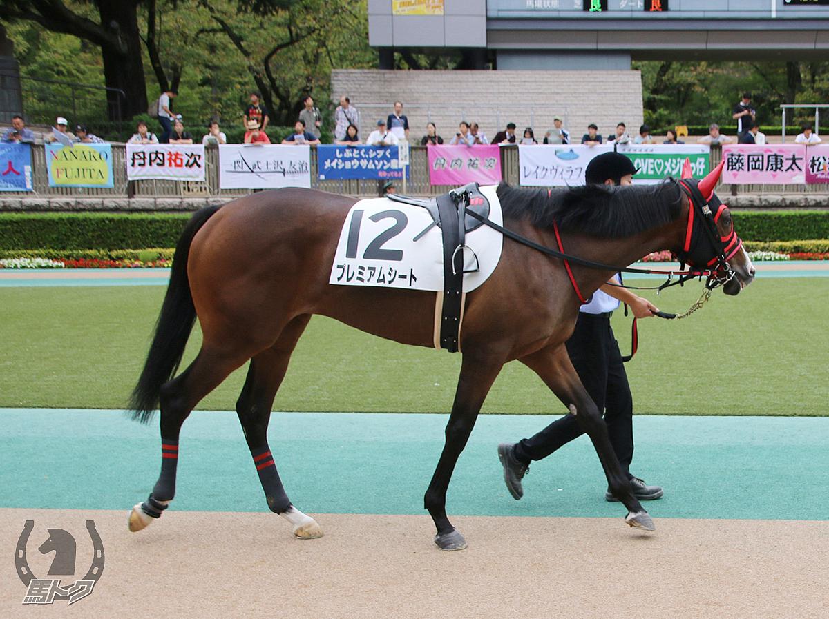 プレミアムシートの馬体写真