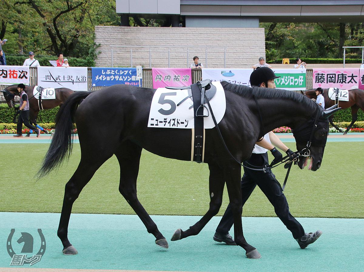 ニューデイズドーンの馬体写真