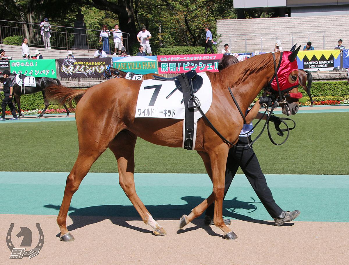 ワイルドオーキッドの馬体写真