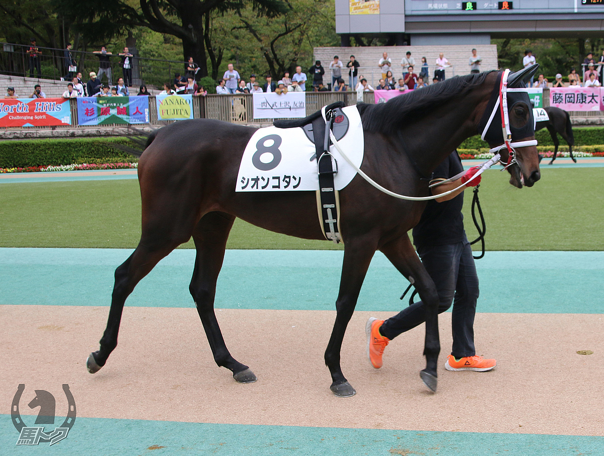 シオンコタンの馬体写真