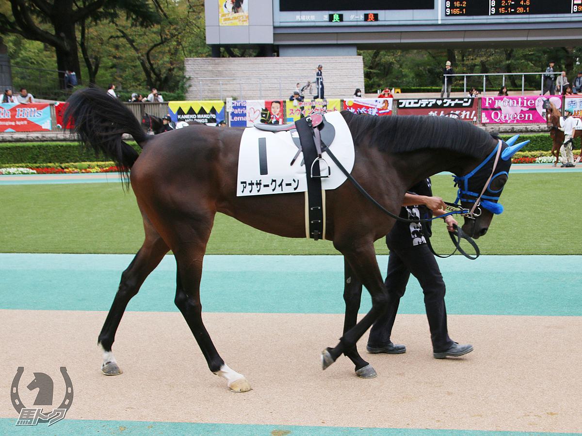 アナザークイーンの馬体写真