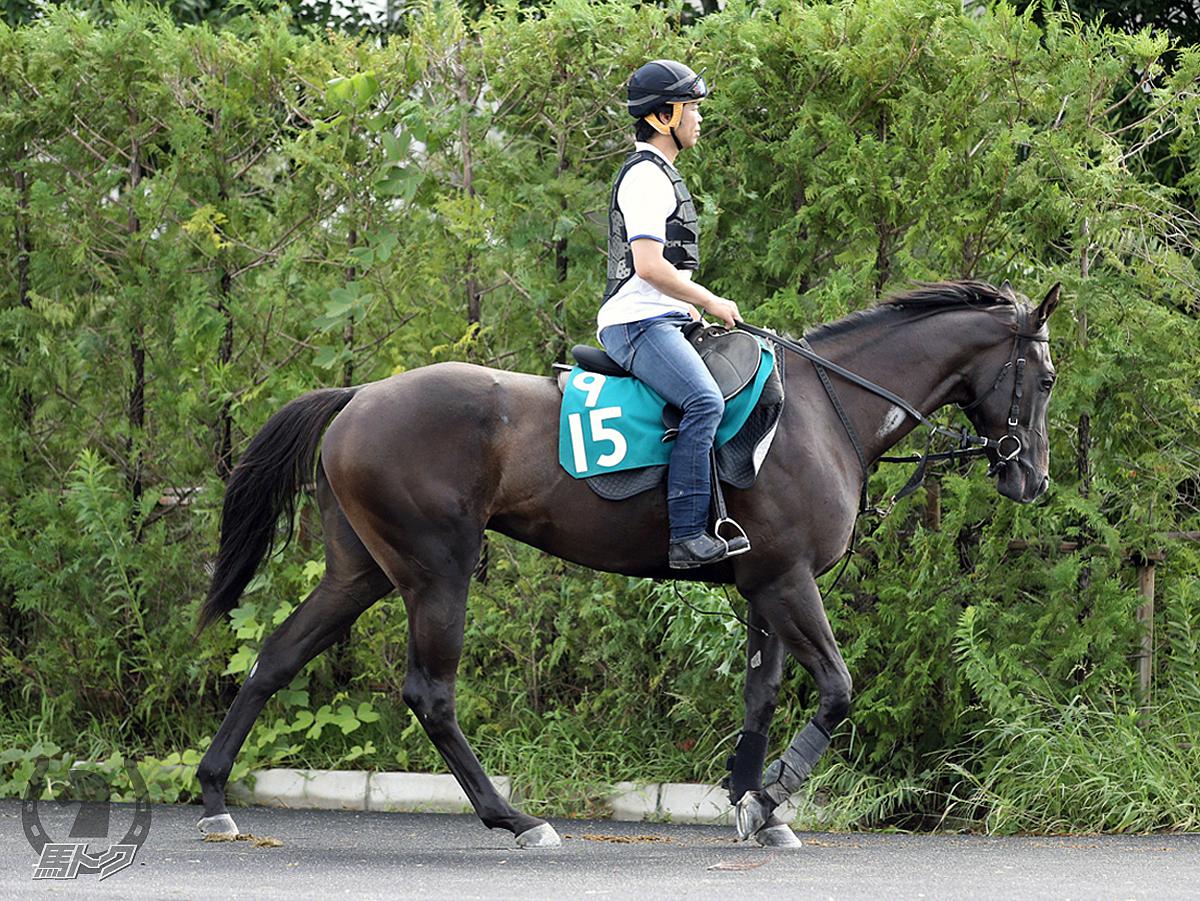 テンザンヒの馬体写真