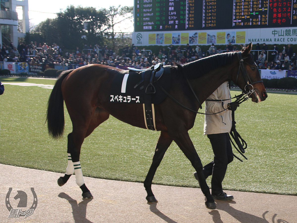 スペキュラースの馬体写真