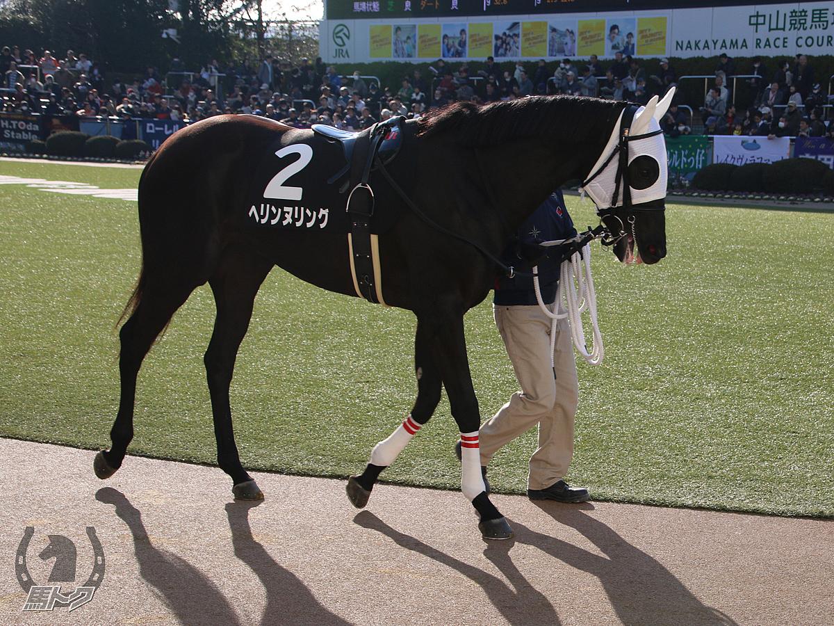 ヘリンヌリングの馬体写真